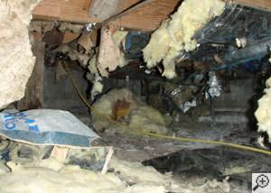 A messy crawl space filled with rotting insulation and debris in Palo Alto.
