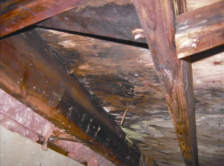 Mold And Rot In A Fremont Crawl E
