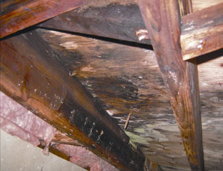 mold and rot in a Fremont crawl space