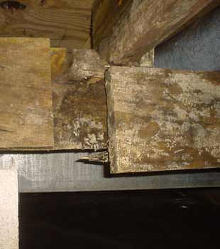 Extensive basement rot found in Oakland by Clean CrawlSpace Inc.