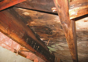 Extensive crawl space rot damage growing in Mountain View
